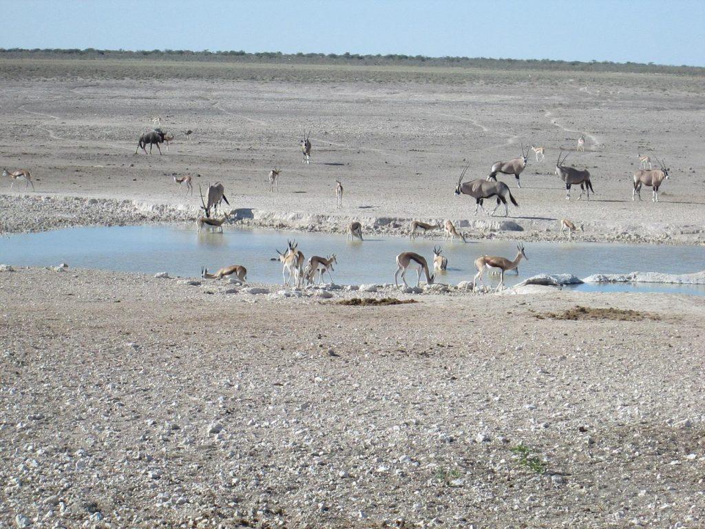 Foto Namibia 03
