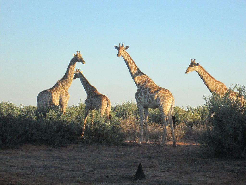 Foto Namibia 04